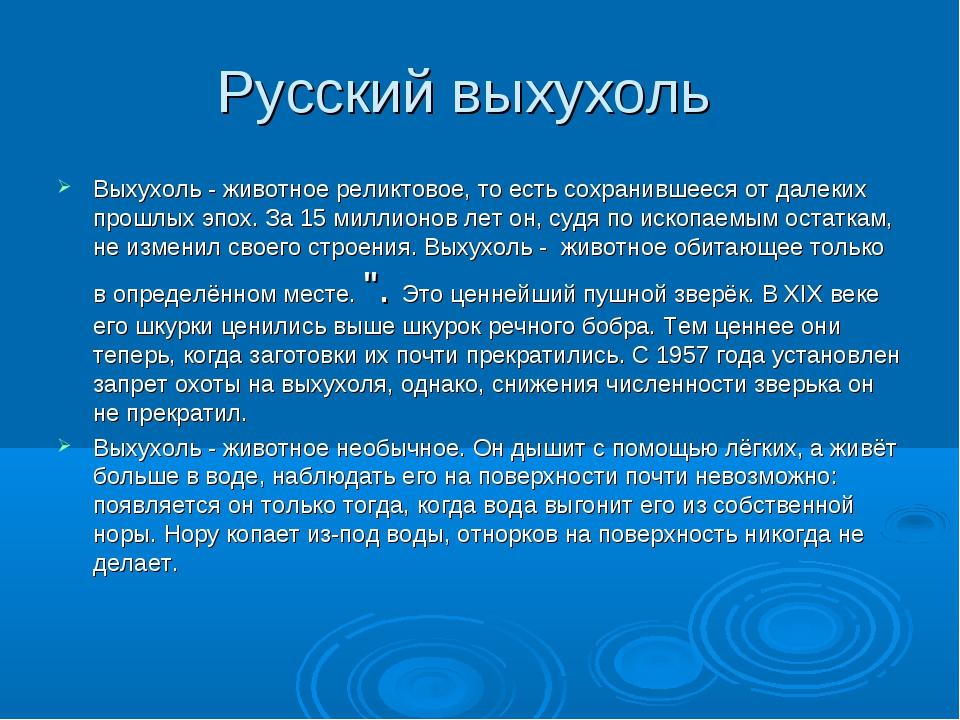 Русский выхухоль Выхухоль - животное реликтовое, то есть сохранившееся от дал...