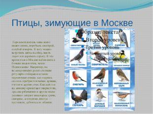 Птицы, зимующие в Москве Городской житель чаще всего видит синиц, воробьев, с
