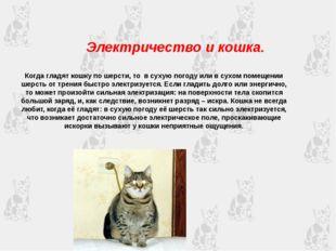 Электричество и кошка. Когда гладят кошку по шерсти, то в сухую погоду или в