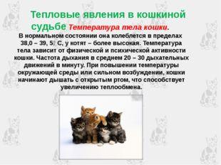 Тепловые явления в кошкиной судьбе Температура тела кошки. В нормальном сост