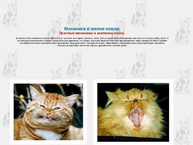Механика в жизни кошки. Простые механизмы в анатомии кошки. В скелете этого...