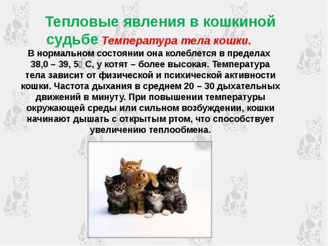 Тепловые явления в кошкиной судьбе Температура тела кошки. В нормальном сост...