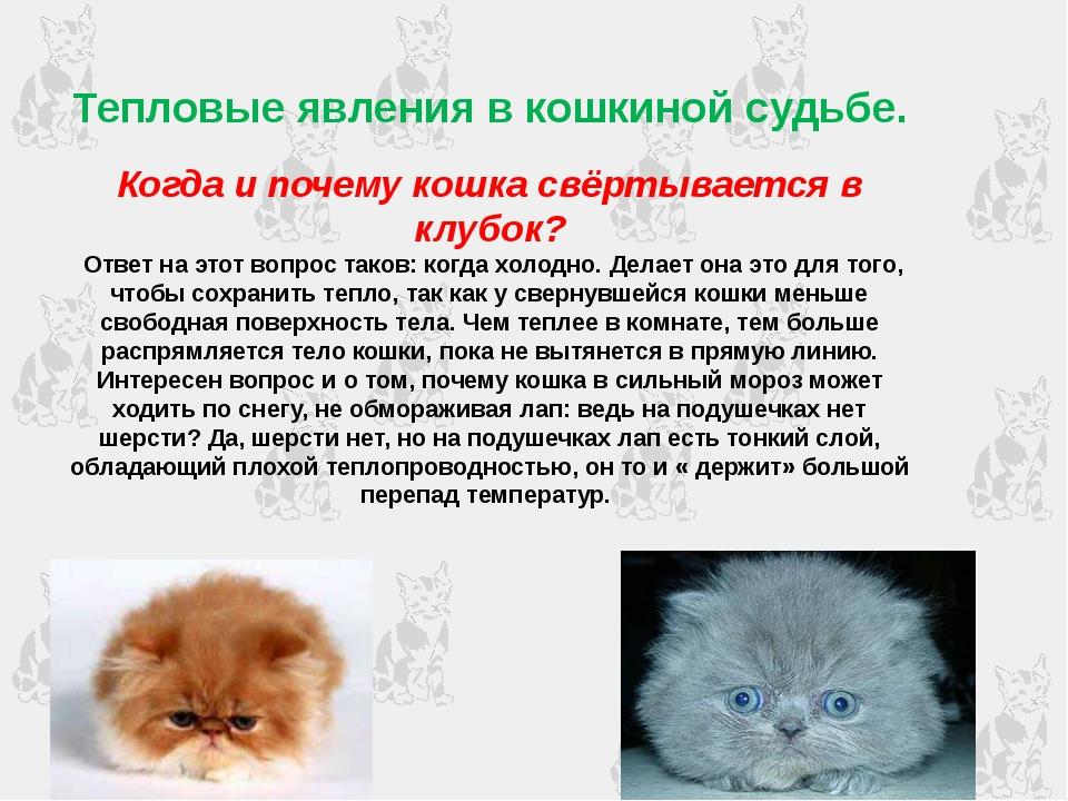 Тепловые явления в кошкиной судьбе. Когда и почему кошка свёртывается в клубо...
