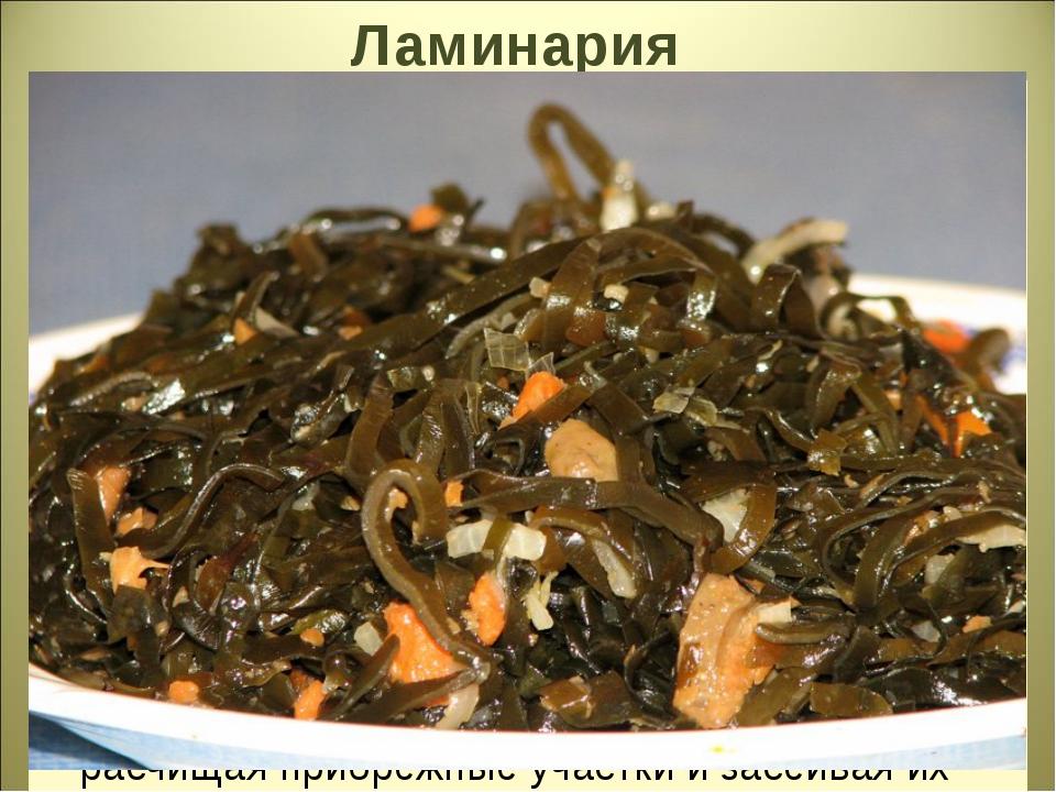 Ламинария Иначе её называют морской капустой. Её слоевище достигает в длину н...