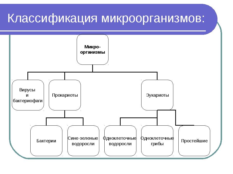Классификация микроорганизмов: