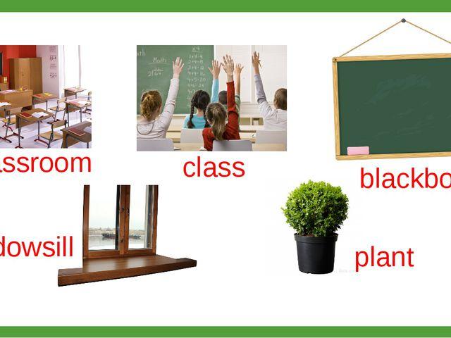 classroom class blackboard windowsill plant