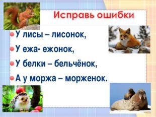 У лисы – лисонок, У ежа- ежонок, У белки – бельчёнок, А у моржа – морженок.