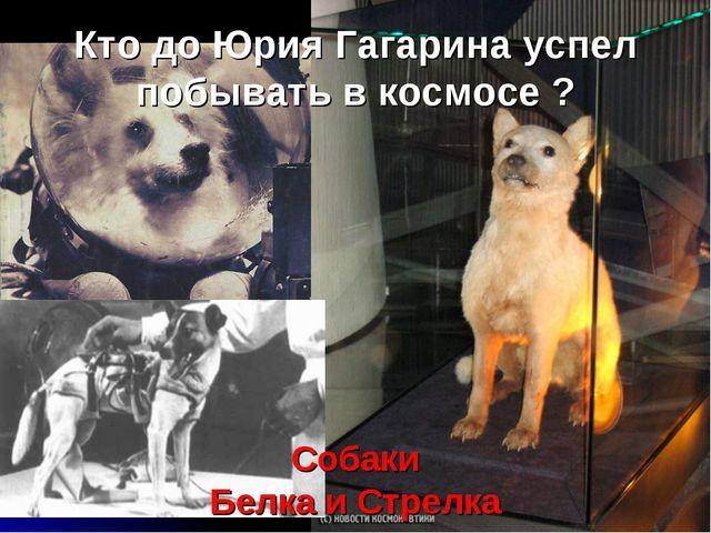 Кто до Юрия Гагарина успел побывать в космосе ? Собаки Белка и Стрелка
