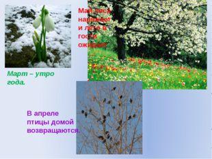 Март – утро года. Май леса наряжает и лето в гости ожидает В апреле птицы дом