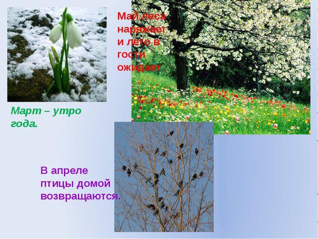 Март – утро года. Май леса наряжает и лето в гости ожидает В апреле птицы дом...