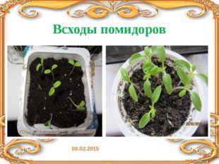 Всходы помидоров 09.02.2015