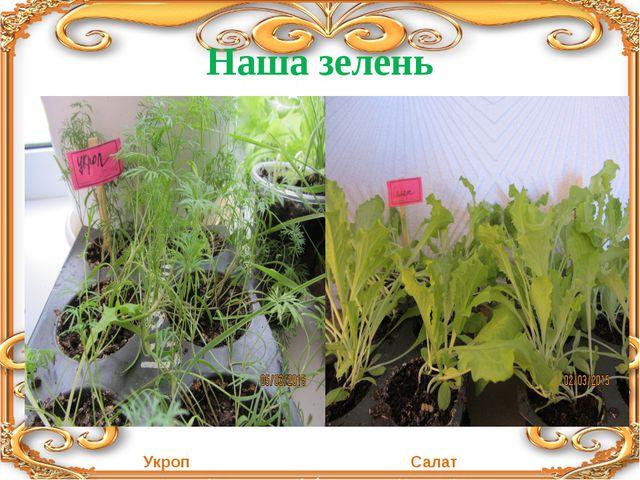 Наша зелень Укроп Салат