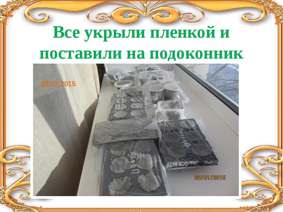 Все укрыли пленкой и поставили на подоконник 26.01.2015