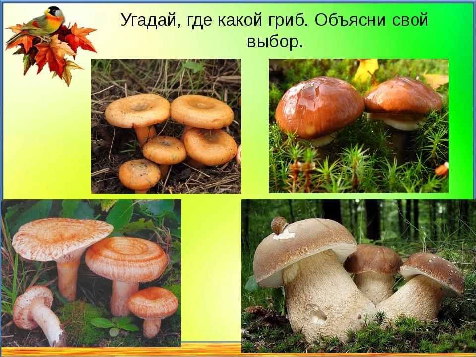 Угадай, где какой гриб. Объясни свой выбор.