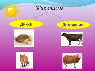 Животные Дикие Домашние