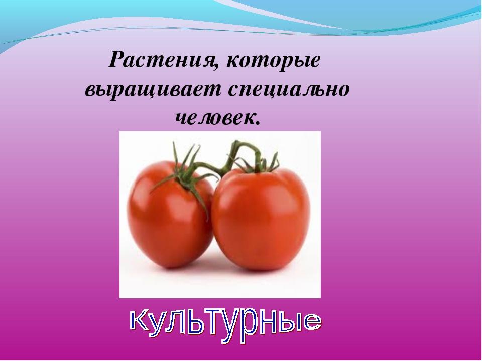 Растения, которые выращивает специально человек.