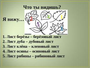 Что ты видишь? Я вижу… 1. Лист берёзы – берёзовый лист 2. Лист дуба – дубовый