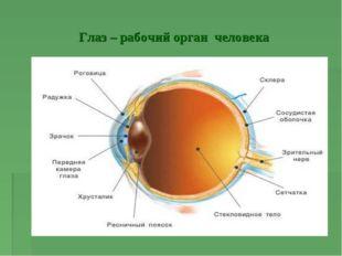 Глаз – рабочий орган человека