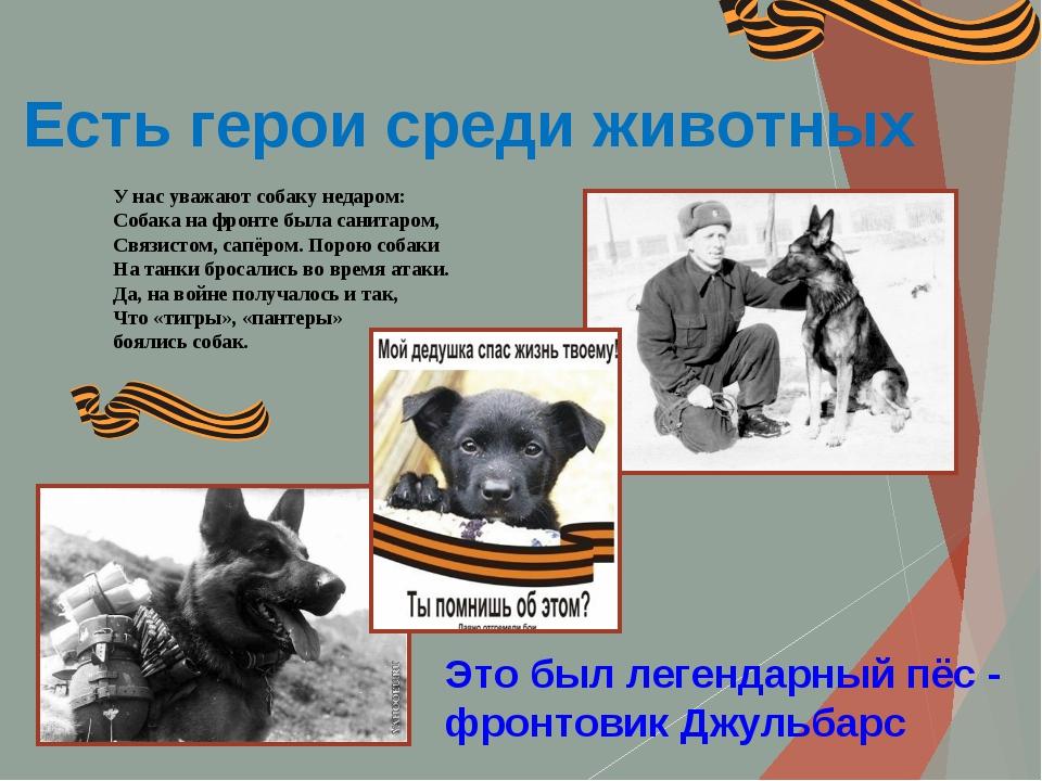 Есть герои среди животных Это был легендарный пёс - фронтовик Джульбарс У нас...