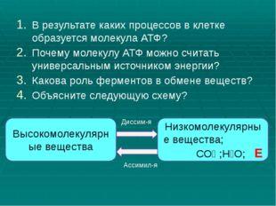 В результате каких процессов в клетке образуется молекула АТФ? Почему молекул