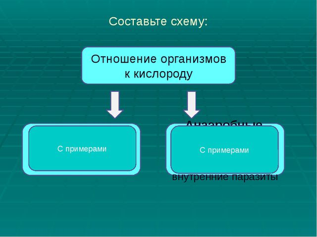 Обмен Веществ 9 Класс Презентация