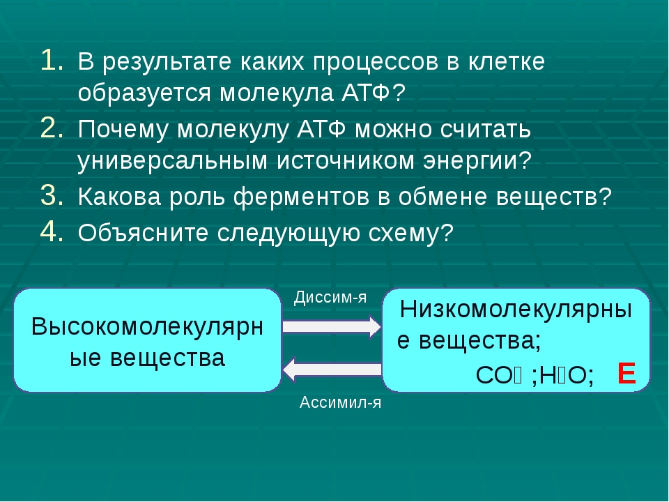 В результате каких процессов в клетке образуется молекула АТФ? Почему молекул...