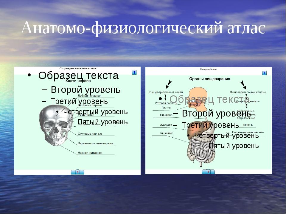 Анатомо-физиологический атлас