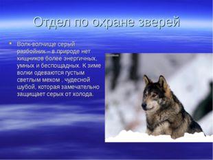 Отдел по охране зверей Волк-волчище серый разбойник – в природе нет хищников