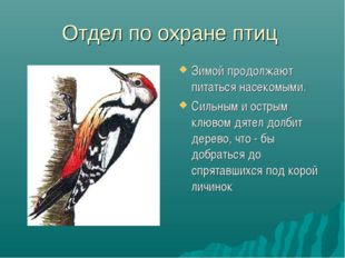 Отдел по охране птиц Зимой продолжают питаться насекомыми. Сильным и острым к