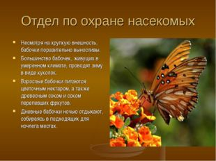 Отдел по охране насекомых Несмотря на хрупкую внешность, бабочки поразительно