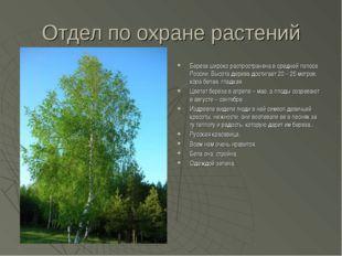 Отдел по охране растений Береза широко распространена в средней полосе России