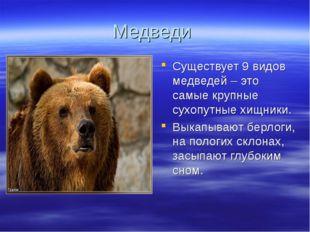Медведи Существует 9 видов медведей – это самые крупные сухопутные хищники. В