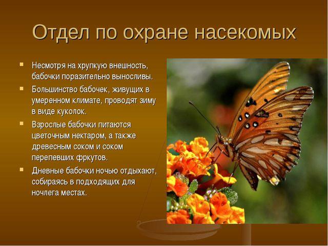 Отдел по охране насекомых Несмотря на хрупкую внешность, бабочки поразительно...