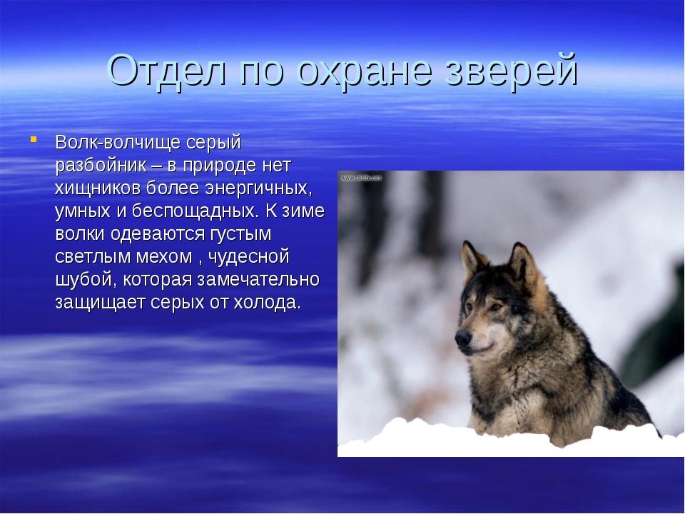 Отдел по охране зверей Волк-волчище серый разбойник – в природе нет хищников...