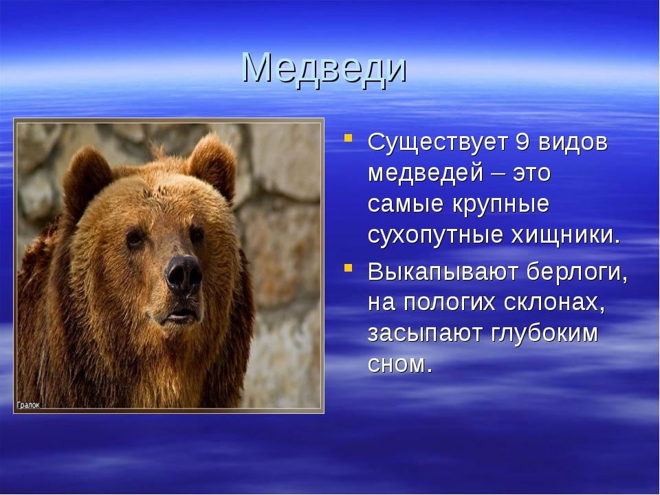 Медведи Существует 9 видов медведей – это самые крупные сухопутные хищники. В...