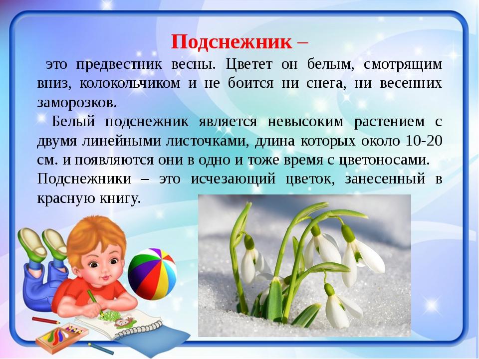 Подснежник– это предвестник весны. Цветет он белым, смотрящим вниз, колоколь...