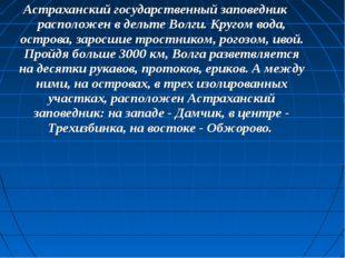 Астраханский государственный заповедник расположен в дельте Волги. Кругом вод