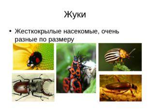 Жуки Жесткокрылые насекомые, очень разные по размеру