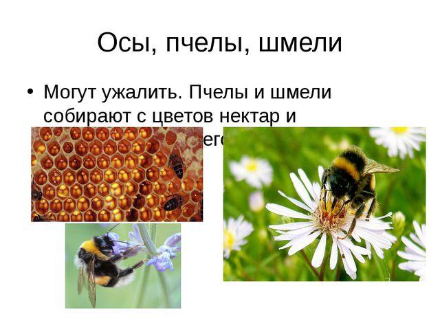 Осы, пчелы, шмели Могут ужалить. Пчелы и шмели собирают с цветов нектар и пер...