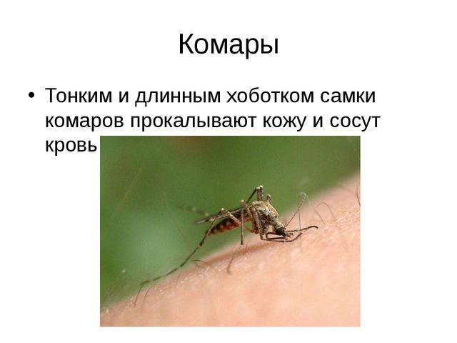 Комары Тонким и длинным хоботком самки комаров прокалывают кожу и сосут кровь