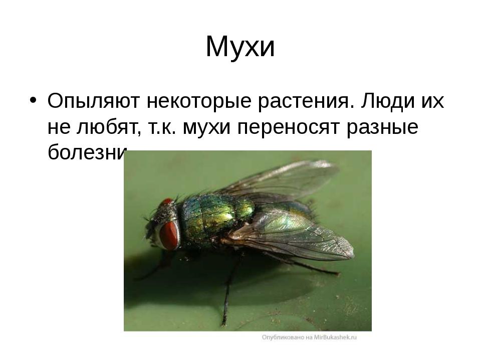 Мухи Опыляют некоторые растения. Люди их не любят, т.к. мухи переносят разные...
