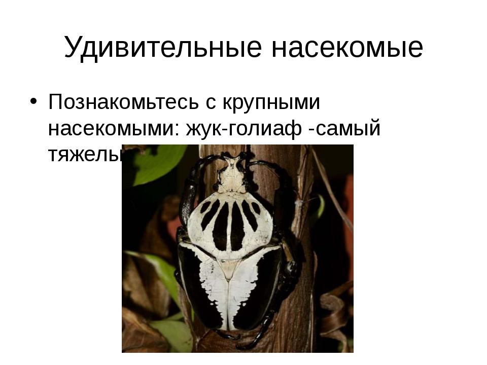 Удивительные насекомые Познакомьтесь с крупными насекомыми: жук-голиаф -самый...