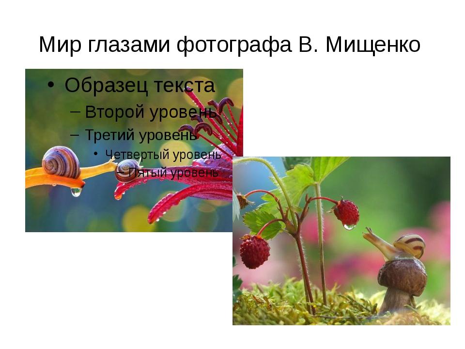 Мир глазами фотографа В. Мищенко