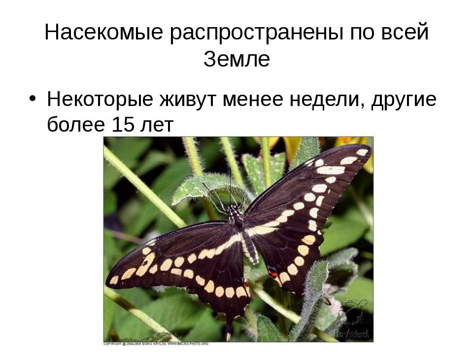 Насекомые распространены по всей Земле Некоторые живут менее недели, другие б...