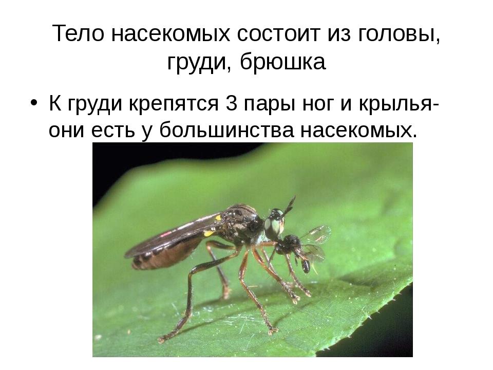 Тело насекомых состоит из головы, груди, брюшка К груди крепятся 3 пары ног и...