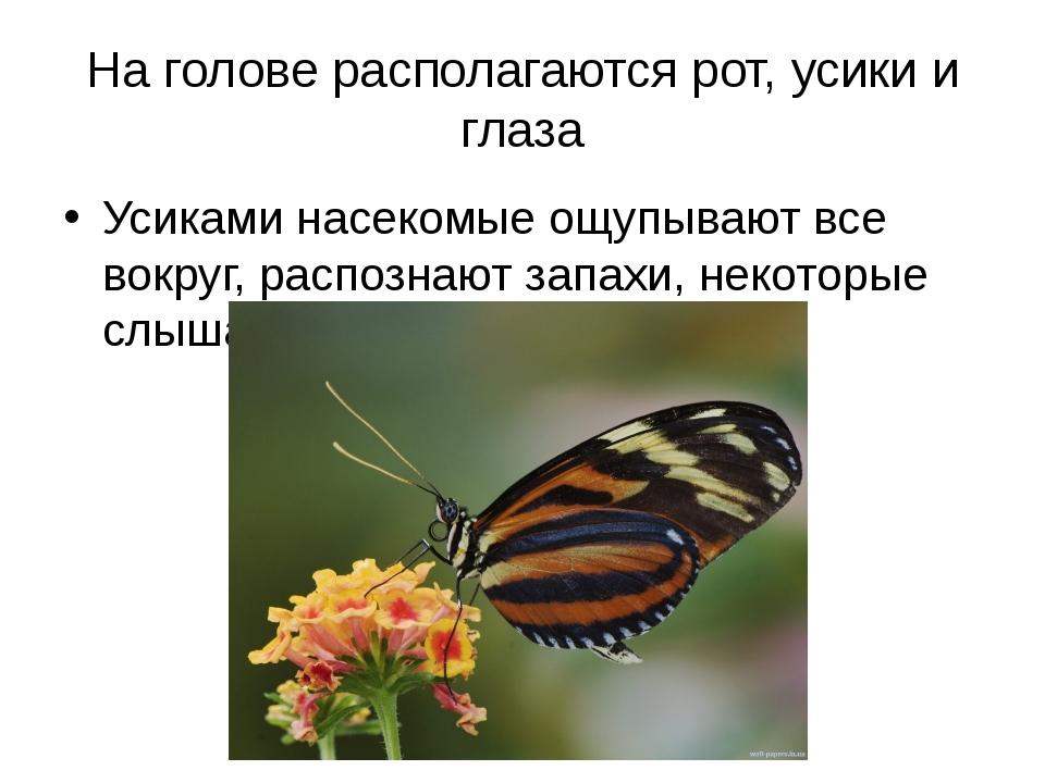На голове располагаются рот, усики и глаза Усиками насекомые ощупывают все во...