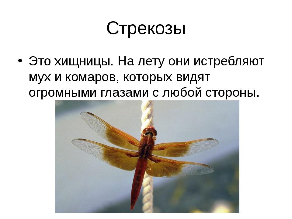 Стрекозы Это хищницы. На лету они истребляют мух и комаров, которых видят огр...