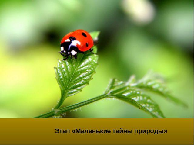 Этап «Маленькие тайны природы»