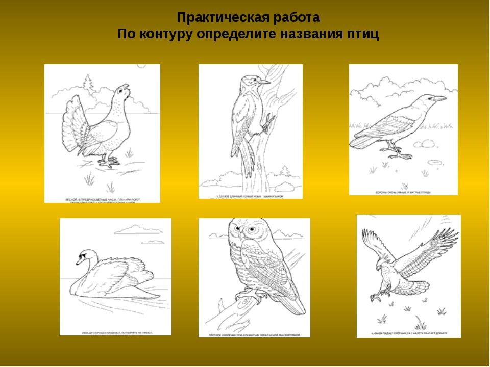 Практическая работа По контуру определите названия птиц