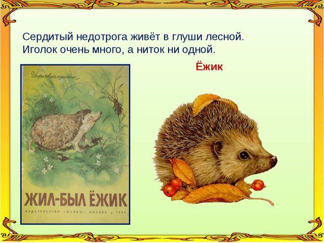 Сердитый недотрога живёт в глуши лесной. Иголок очень много, а ниток ни одной...